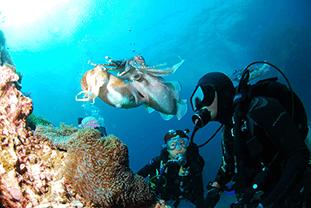 Tauchgebiete für tolle Unterwasseraufnahmen